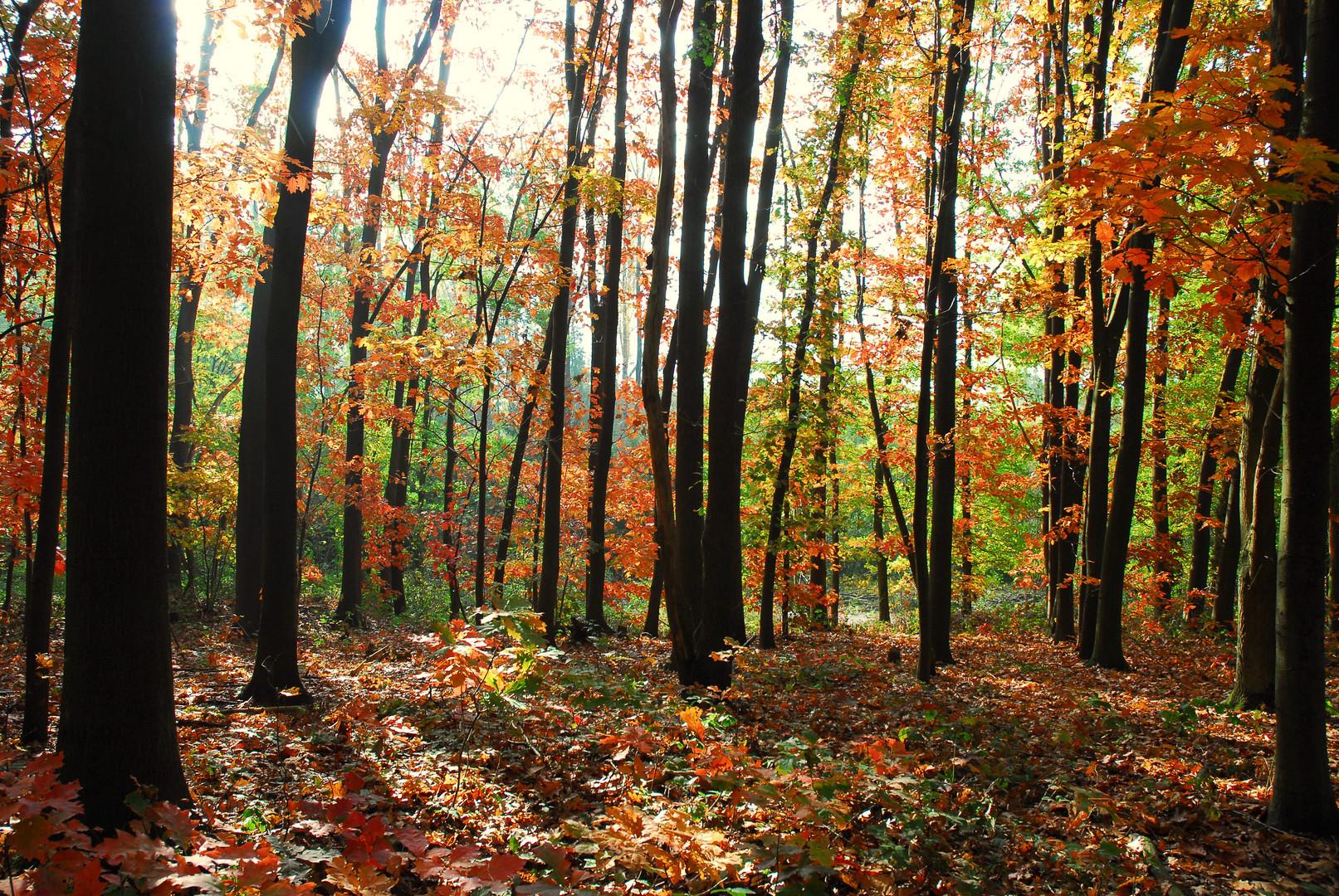 Der bunte Seelenwald