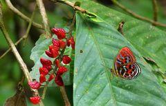 Der bunteste Schmetterling