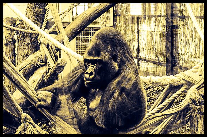 Der Chef im Londoner Zoo