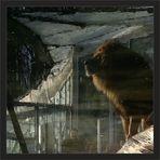 """""""Der Denker"""" .... frei nach Rodin"""