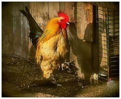 Der Detektiv im Hühnerstall