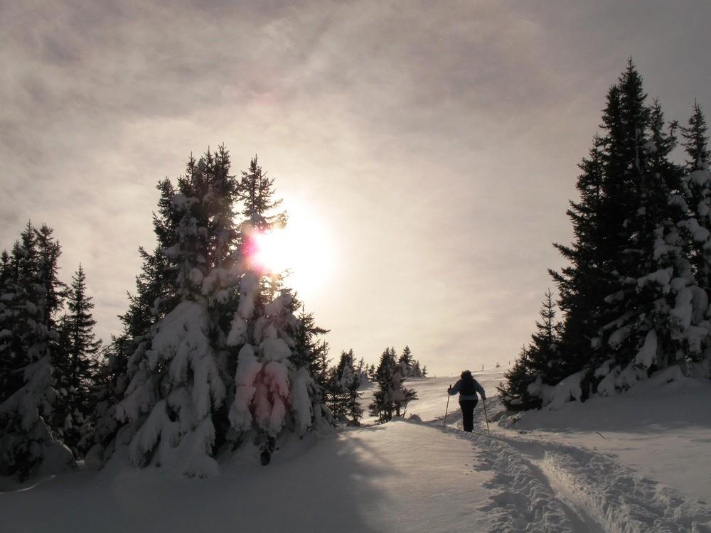 der Dezember-Sonne entgegen