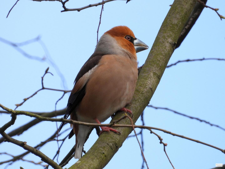 Dicker Hintern Wird Schön Gevögelt