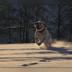 Der Dicke im Schnee