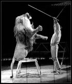 der Dompteur und der Löwe