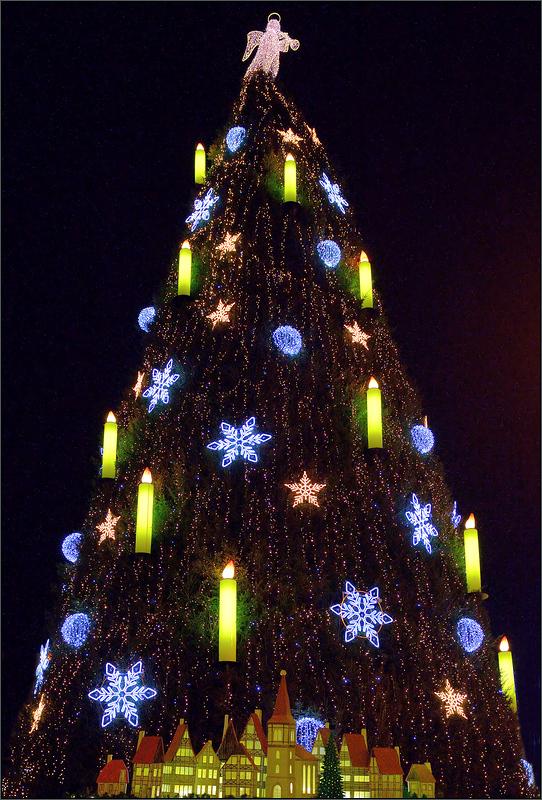 Dortmund Weihnachtsbaum.Der Dortmunder Weihnachtsbaum Foto Bild Spezial Dortmund