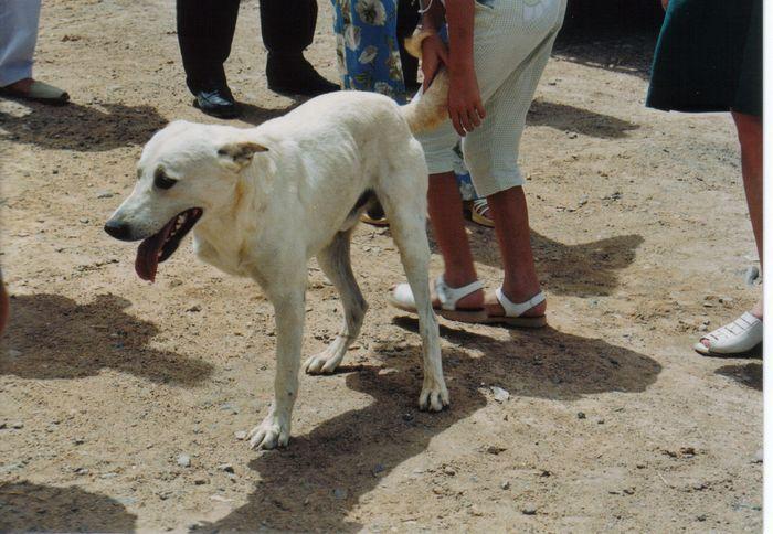 Der dreibeinige Hund