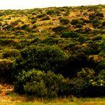 Der Duft Dalmatiens von Kräutern,  Sträuchern und Macchia