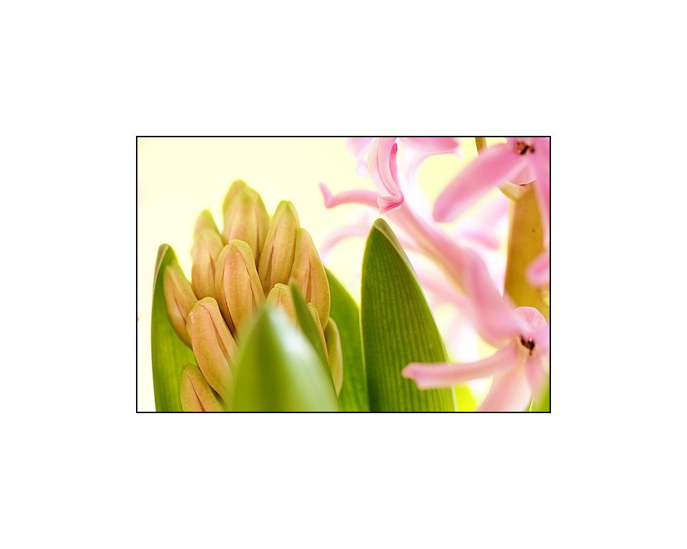 Der Duft vom Frühling