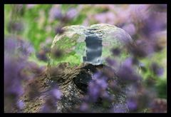 Der Duft von Lavendel