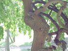 Der einäugige Baum