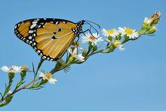 Schmetterlinge Käfer