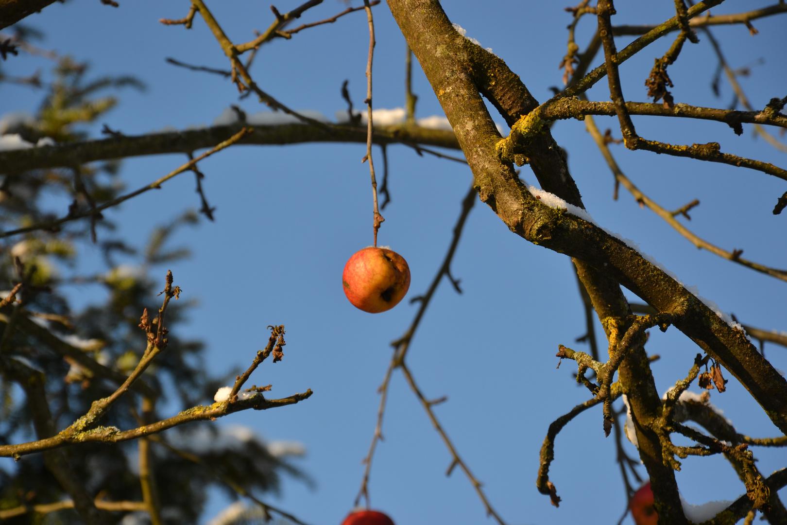 Der einsame Apfel