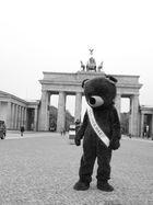 Der einsame Bär