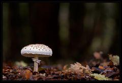 """Der """"Einsame"""" im Wald"""
