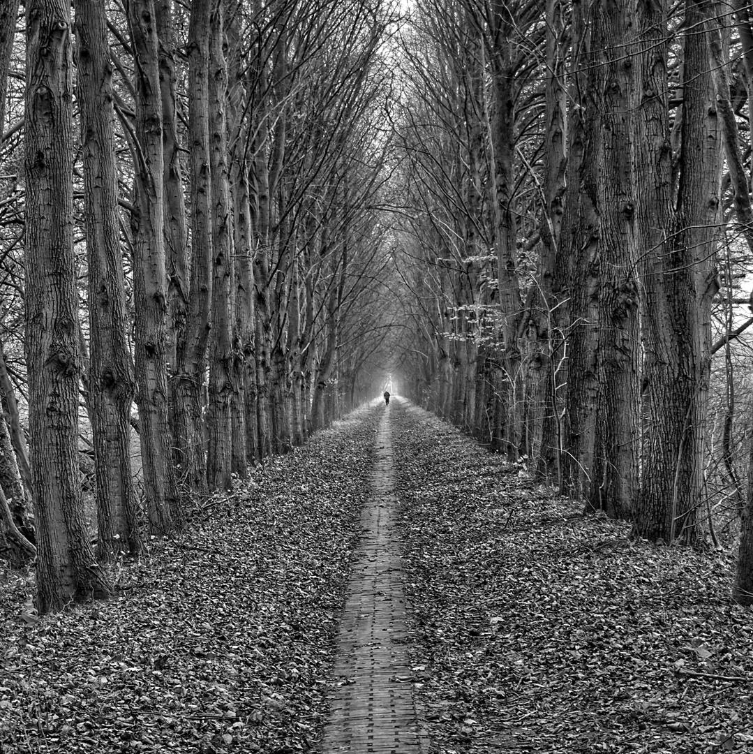 Der einsame Läufer