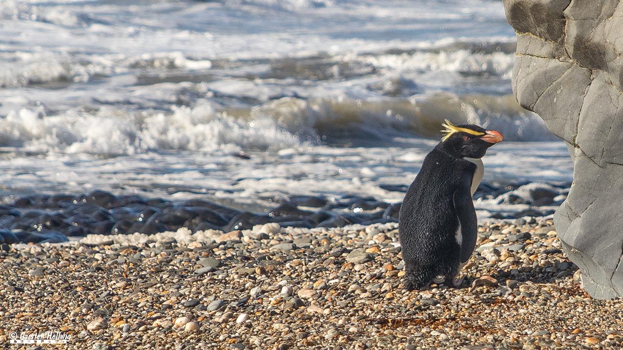 Der einsame Pinguin