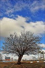 * Der einsamme Baum...
