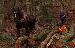 Der Einsatz von Pferdearbeit in der modernen Forstwirtschaft ...