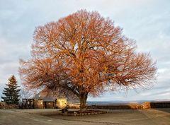 Der Einzelbaum ...