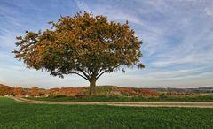Der einzelne Baum IV