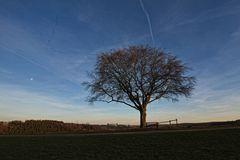 Der einzelne Baum VI