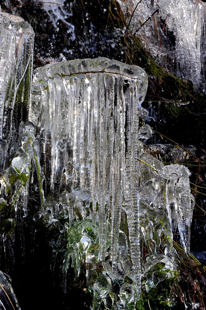 Der Eisbart