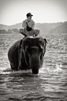 Der Elefant und sein Mensch
