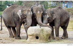 Der Elefantentantenstammtisch...