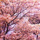 der Erblühte