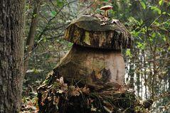 Der Erlenholzpilz heute
