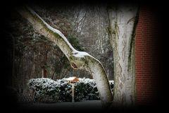 Der erst Schnee