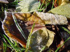 Der erste Frost!