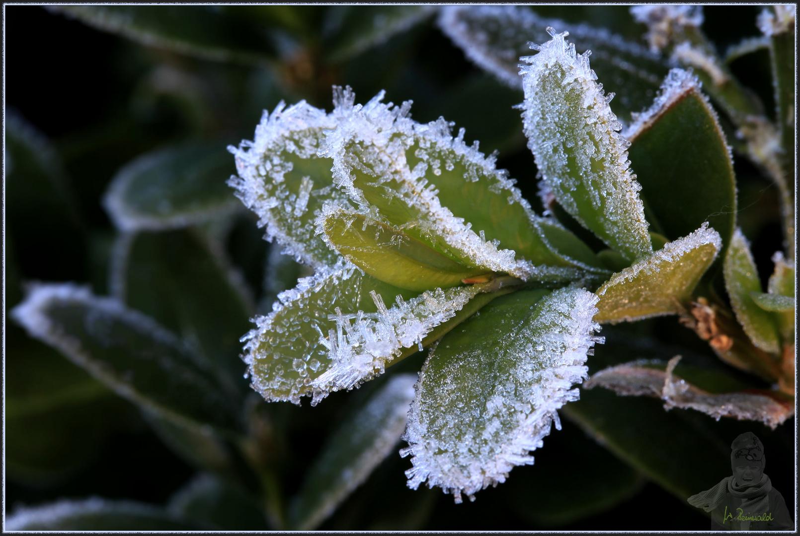 Der erste Frost in Mittelfranken