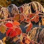 Der erste Frost und die Herbstfarben ....