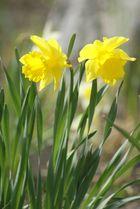Der erste Frühling