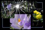 Der erste Hauch vom Frühling