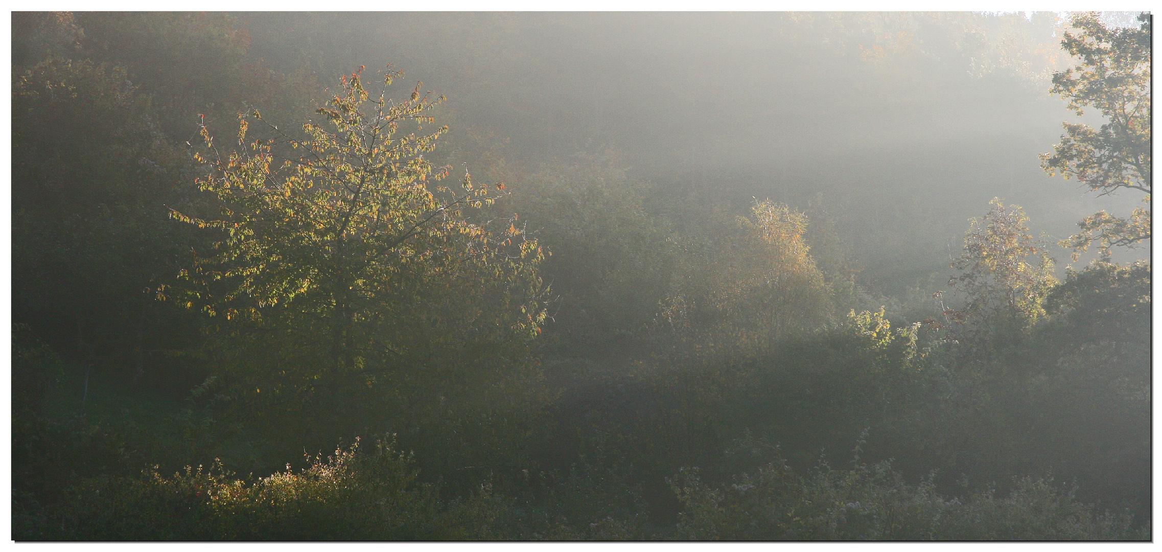 Der erste Morgenstrahl...