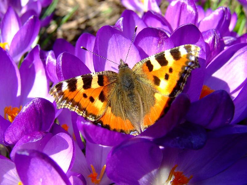 Der erste Schmetterling 2007