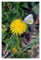 Der erste Schmetterling 2017
