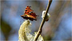 ...der erste Schmetterling