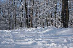 Der erste Schnee ... (1)