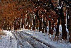 Der erste Schnee 3