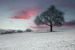 . . . der erste Schnee