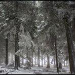 Der erste Schnee auf dem Feldberg....