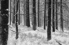 Der erste Schnee ....