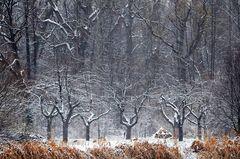 Der erste Schnee in Hessen 2020/21