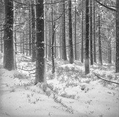 Der erste Schnee .... Variante für Clau.Dia' s