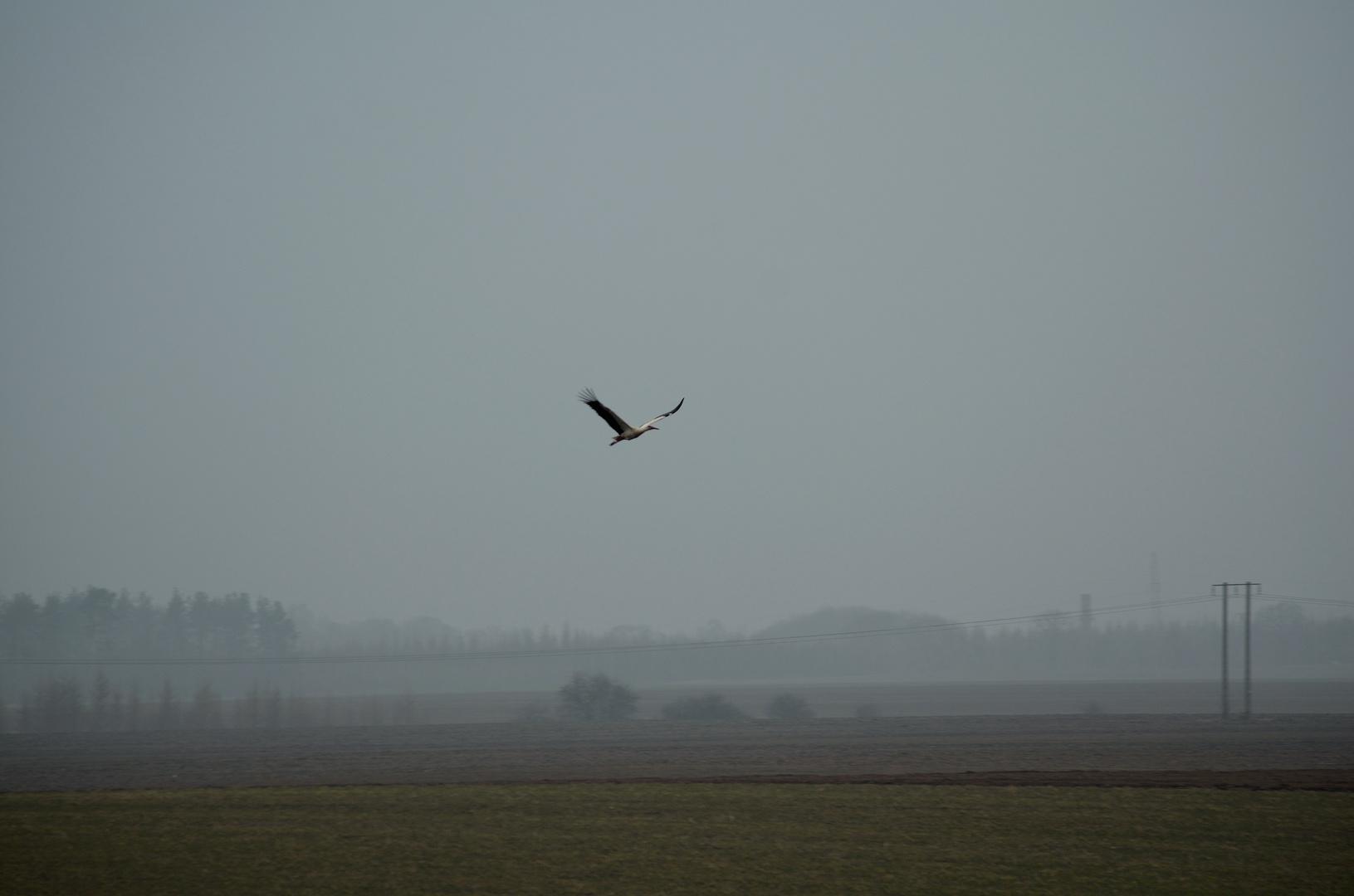 Der erste Storch dieses Jahr