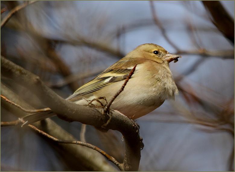 Der erste Vogel mit meiner neuen Canon